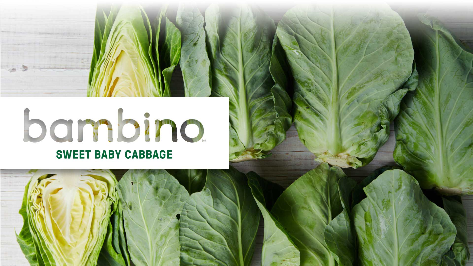 New! Bambino sweet baby cabbage